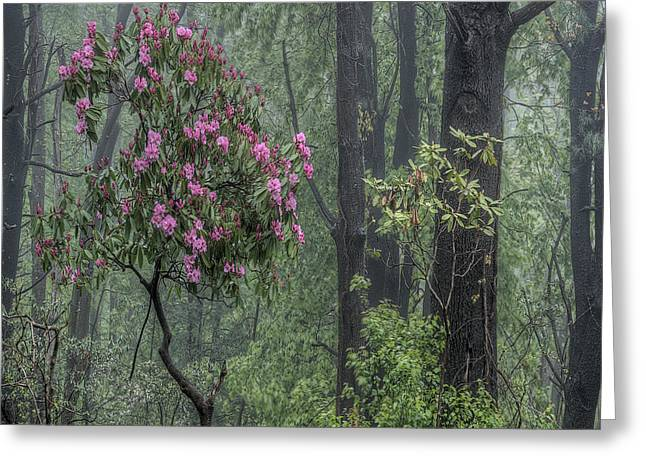 Rhodendron Greeting Cards - Forest Dancer Greeting Card by David Stone