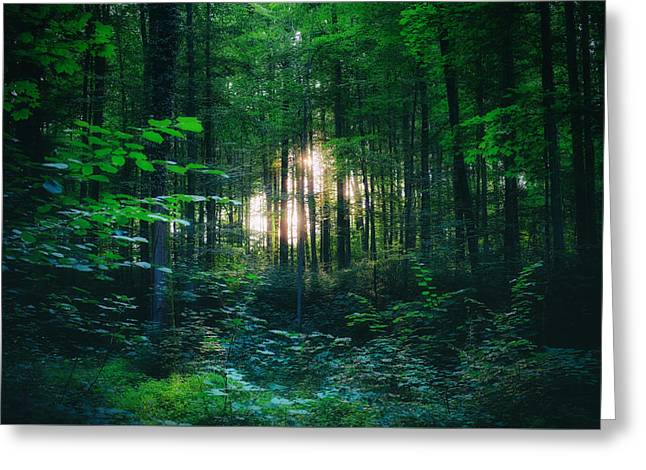 Swiss Photographs Greeting Cards - Light shining through the trees  Greeting Card by Fabrizio Troiani
