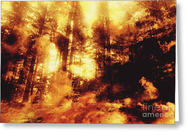 Forest Fires Greeting Card by Jorgo Photography - Wall Art Gallery