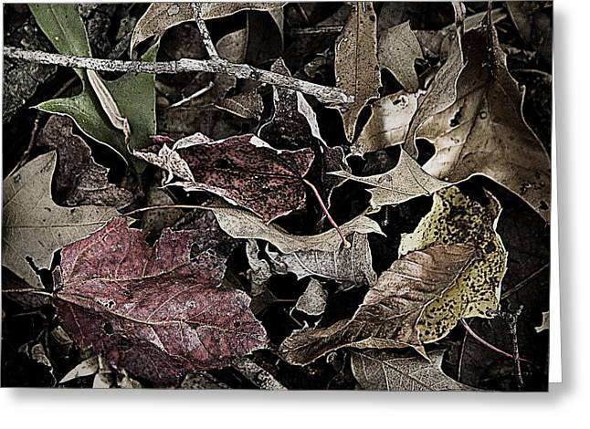 Forest Floor - Leaf 10 Greeting Card by Pete Hellmann