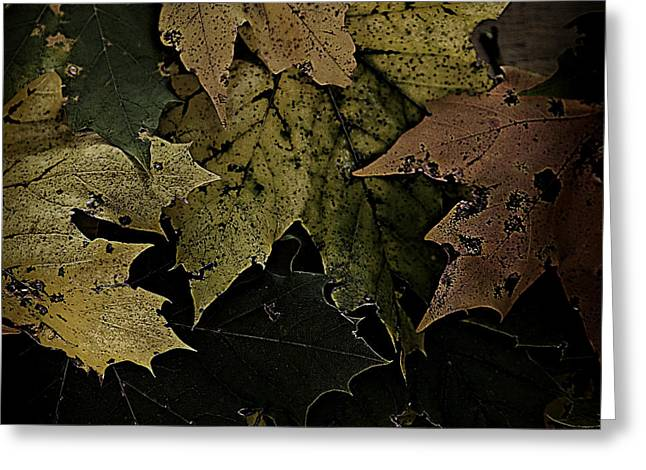 Forest Floor Greeting Cards - Forest Floor - Leaf 16 Greeting Card by Pete Hellmann
