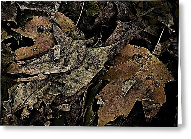 Forest Floor Greeting Cards - Forest Floor - leaf 17 Greeting Card by Pete Hellmann