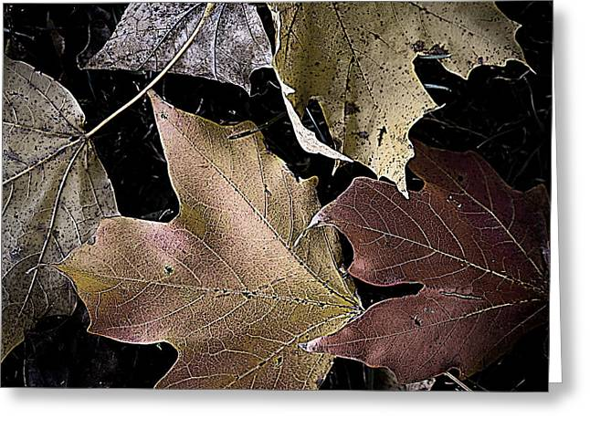 Forest Floor Greeting Cards - Forest Floor - Leaf 2 Greeting Card by Pete Hellmann