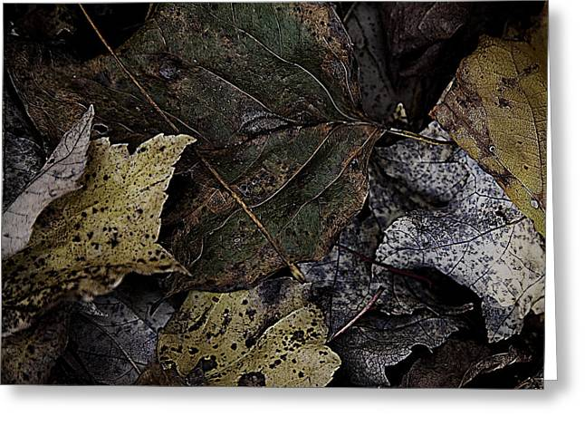 Forest Floor Greeting Cards - Forest Floor - Leaf 7 Greeting Card by Pete Hellmann