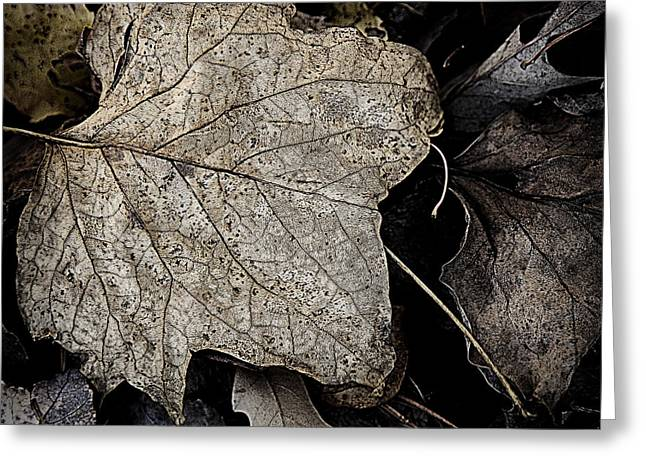 Forest Floor Greeting Cards - Forest Floor - Leaf 8 Greeting Card by Pete Hellmann