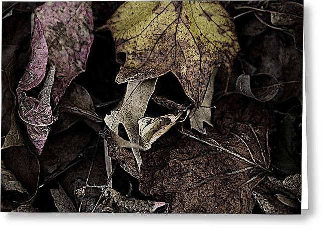 Forest Floor - Leaf 9 Greeting Card by Pete Hellmann
