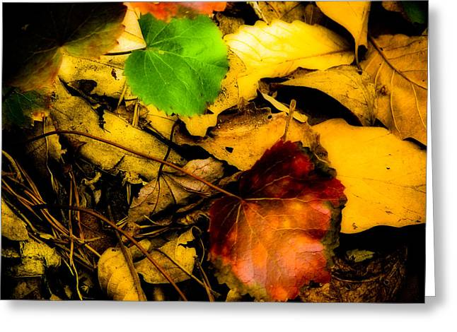 Forest Floor Greeting Cards - Forest Floor Greeting Card by Ches Black