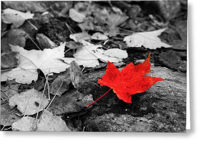 Adam Pender Greeting Cards - Forest Floor Maple Leaf Greeting Card by Adam Pender