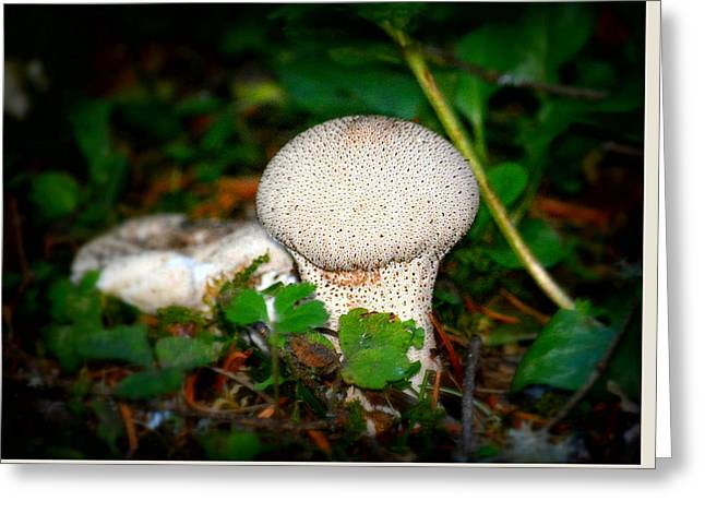 Toadstools Greeting Cards - Forest Floor Mushroom Greeting Card by Lori Seaman