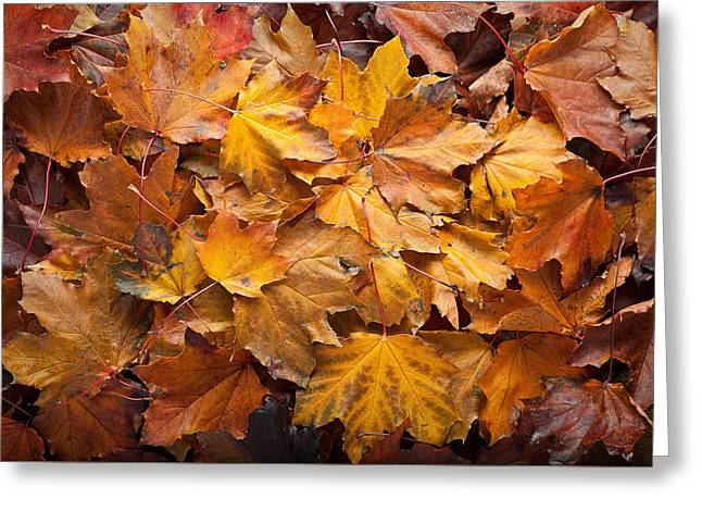 """""""maple Trees"""" Greeting Cards - Forest Floor Greeting Card by Steve Gadomski"""