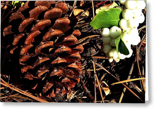 Pine Needles Greeting Cards - Forest Floor Greeting Card by Will Borden
