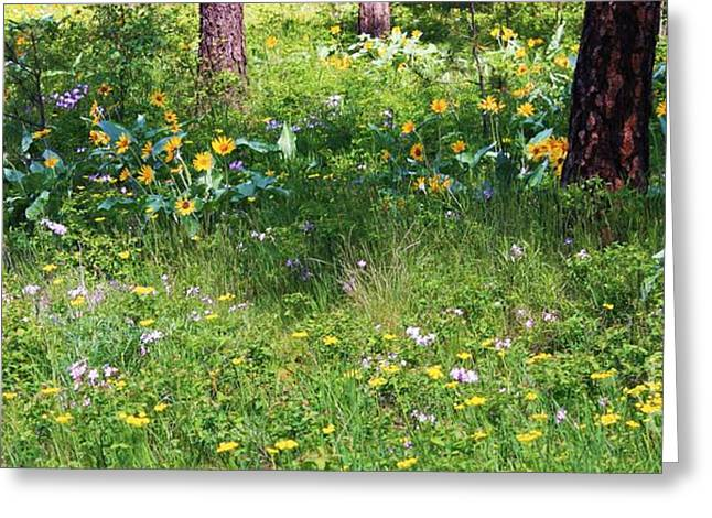 Green And Yellow Greeting Cards - Forest Flowers Landscape Greeting Card by Carol Groenen