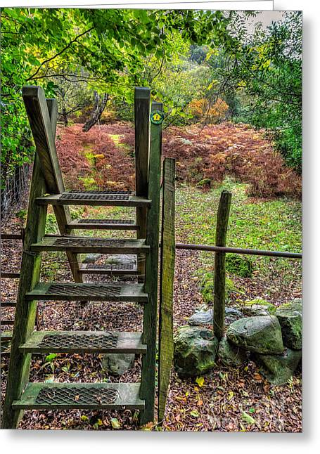 Forest Footpath Greeting Card by Adrian Evans