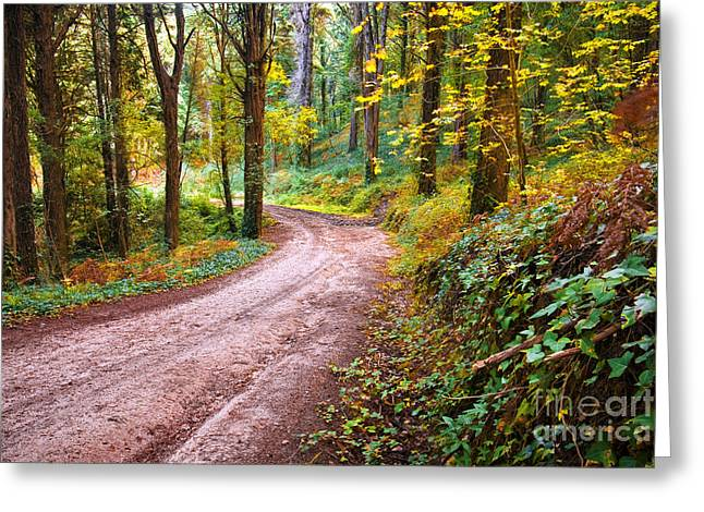 Hike Greeting Cards - Forest Footpath Greeting Card by Carlos Caetano