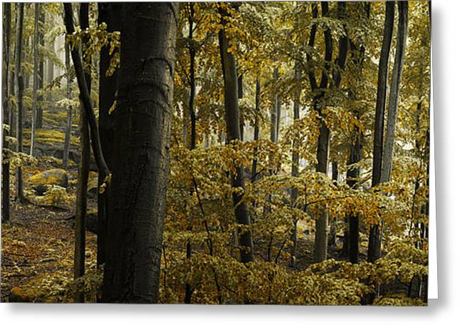 Fall Leaves Photographs Greeting Cards - forest I Greeting Card by Lukas Holas