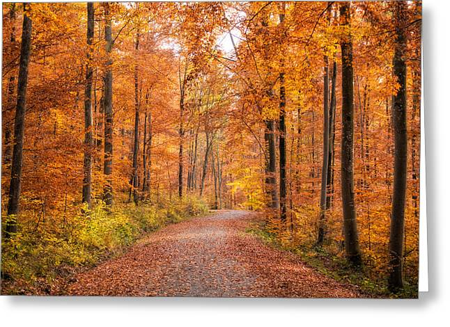 Forest In Autumn Nature Park Schoenbuch Germany Greeting Card by Matthias Hauser