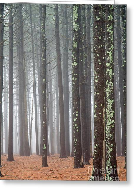 Calligraphy Print Mixed Media Greeting Cards - Forest in the Mist - Long Island Greeting Card by Anahi DeCanio - ArtyZen Studios