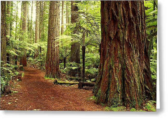Hiking Greeting Cards - Forest Greeting Card by Les Cunliffe