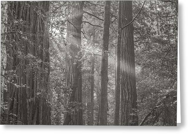 Forest Light Greeting Card by Joseph Smith