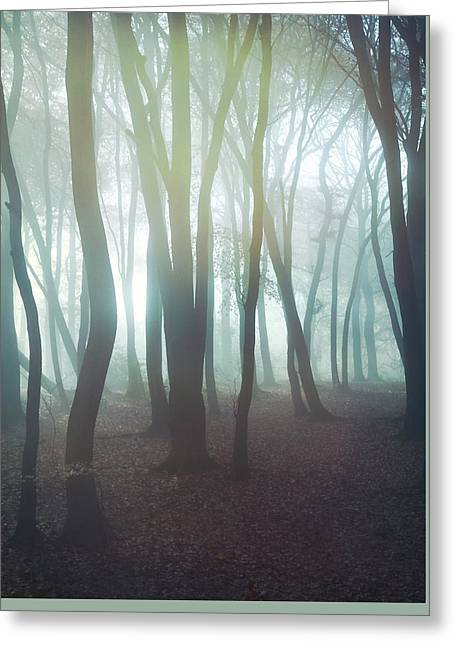 Forest Greeting Card by Mark Owen