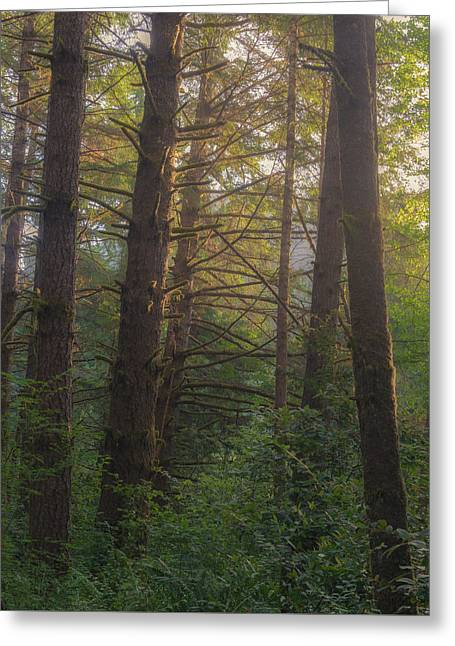 Forest Morning Greeting Card by Joseph Smith