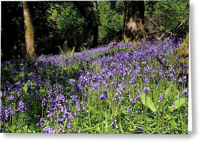 Haunted Forest Greeting Cards - Forest Of Bluebells Greeting Card by Aidan Moran
