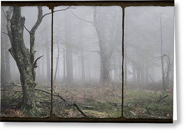 Forest Floor Greeting Cards - FOREST of FOG Greeting Card by Daniel Hagerman