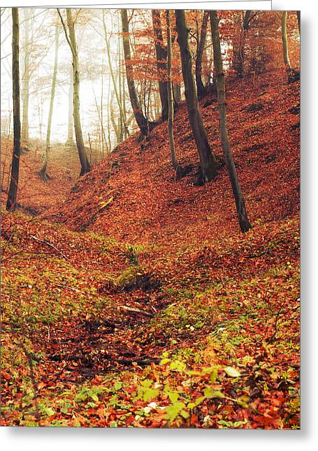 Forest Of November Greeting Card by Joanna Jankowska
