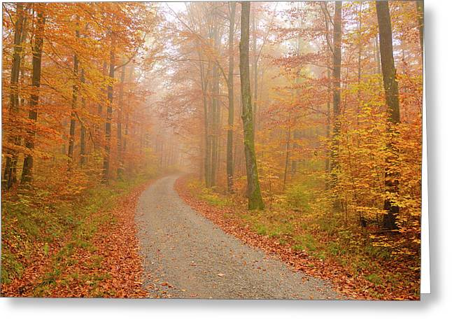 Forest Path In Fall Greeting Card by Matthias Hauser