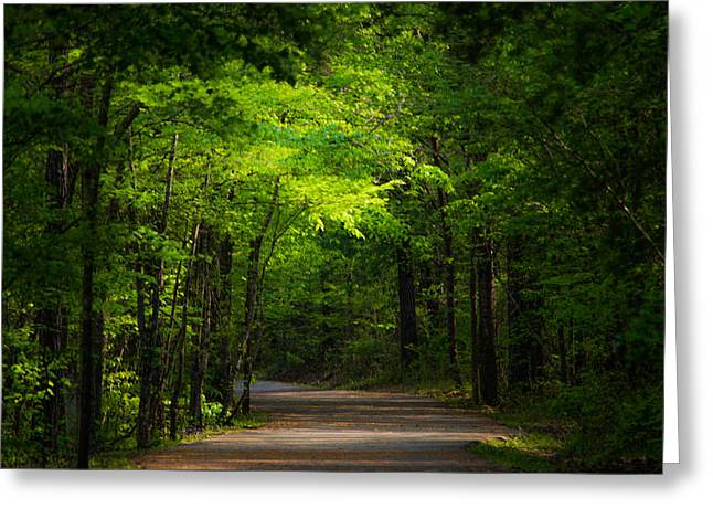 Serenity Landscapes Greeting Cards - Forest Path Greeting Card by Parker Cunningham