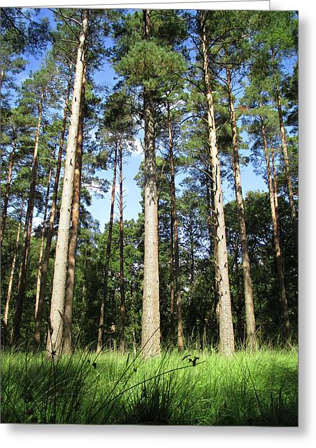 Forest Pines Greeting Card by The Rambler
