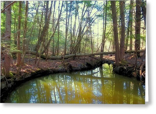 Woodland Scenes Greeting Cards - Forest Pool Greeting Card by MTBobbins Photography