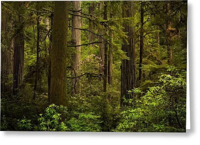 Forest Serenity Greeting Card by Thorsten Scheuermann