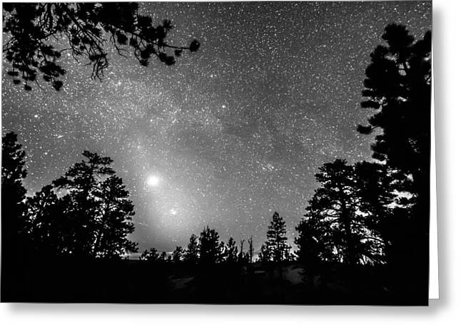 Stellar Prints Greeting Cards - Forest Silhouettes Constellation Astronomy Gazing Greeting Card by James BO  Insogna