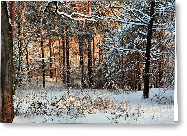 Forest Greeting Card by SK Pfphotography