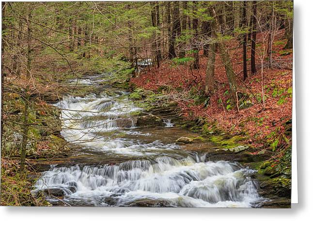 Falling Water Greeting Cards - Forest Stream Greeting Card by Bill Wakeley