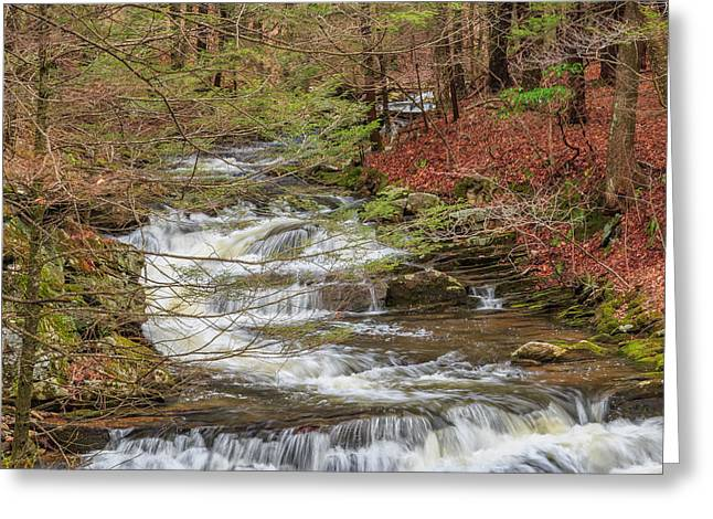 Peace Square Format Greeting Cards - Forest Stream Square Greeting Card by Bill Wakeley