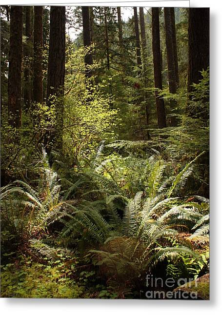 Forest Floor Greeting Cards - Forest Sunlight and Shadows  Greeting Card by Carol Groenen