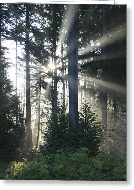 Fir Tree Greeting Cards - Forest Sunrise Greeting Card by Crista Forest
