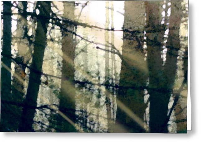 Forest Sunrise Greeting Card by Paul Sachtleben