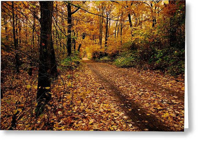 Scott Hovind Greeting Cards - Forest Trail Greeting Card by Scott Hovind