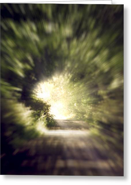 Forest Tunnel Greeting Card by Wim Lanclus