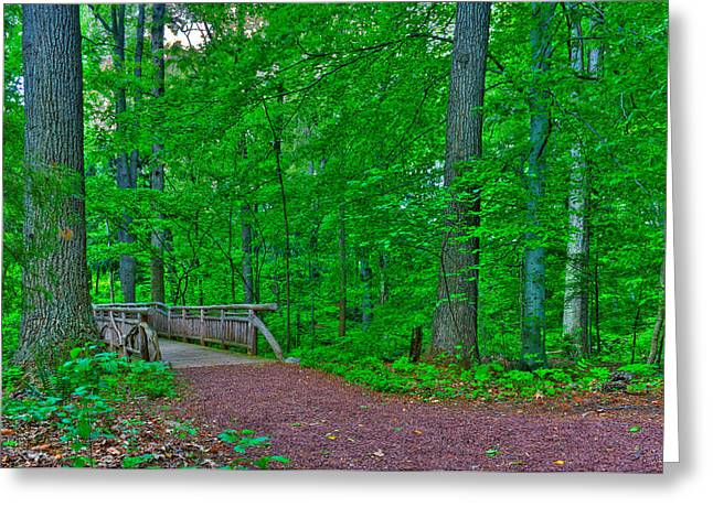 Kevin Hill Photographs Greeting Cards - Forest walk Greeting Card by Kevin Hill