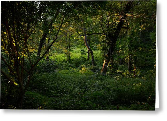 Sudbury Greeting Cards - Forestland in Sudbury MA Wayside Inn Greeting Card by Toby McGuire
