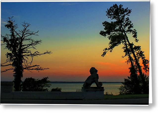 Lions Greeting Cards - Forever Majestic Greeting Card by Olahs Photography