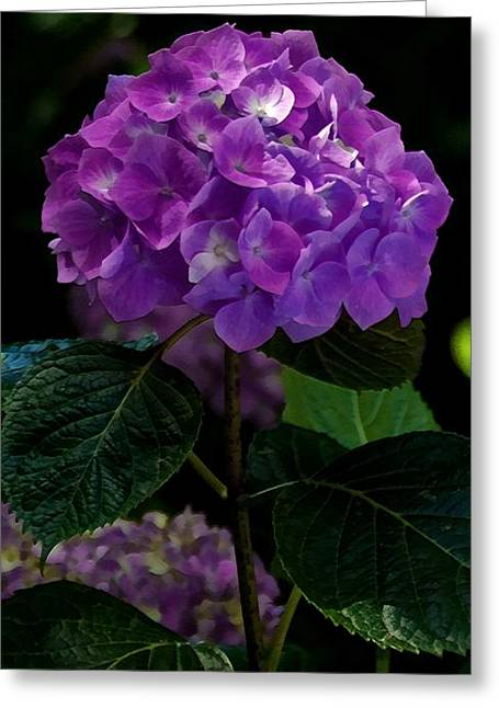 Macro Greeting Cards - Forever Violet Greeting Card by Georgiana Romanovna