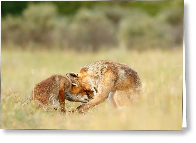 Recently Sold -  - Caring Mother Greeting Cards - Foreverandeverandever - Red Fox Love Greeting Card by Roeselien Raimond