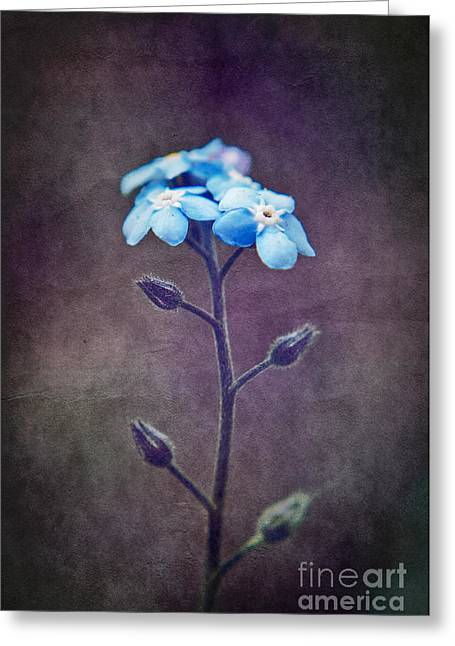 Texture Floral Greeting Cards - Forget Me Not 04 - s6ct7b Greeting Card by Variance Collections