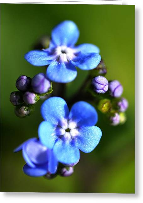 Covering Up Greeting Cards - Forget-me-not Greeting Card by Noah Cole