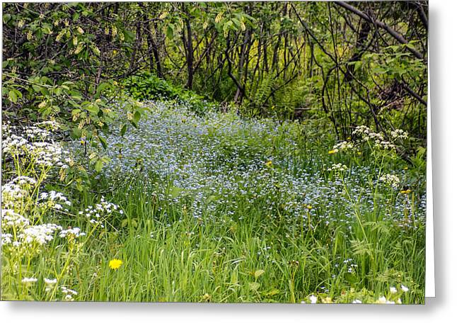 Maine Spring Greeting Cards - Forget Me Not Path Greeting Card by William Tasker